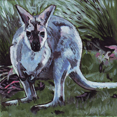 D441 wallaby