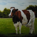 Red Holstein cow