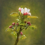 Apple Blossom (2)