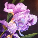 Iris in purple/white