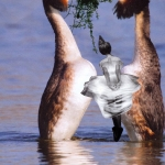 COLLAGE - DANSEN OP WATER -