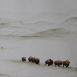 Bisons - Yellowstone National Park, winter scene 1