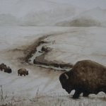 Bisons Yellowstone National Park, winter scene 2