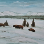 Bisons Yellowstone National Park 6, winter scene