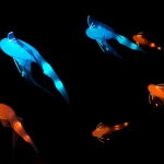 Glow, fish in the dark