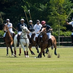 Paarden polo