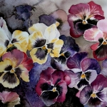 Winterviolets