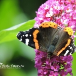Enjoy this beautyful butterfly (met filmpje)
