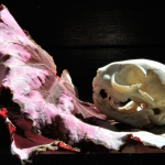 still life with cat skull