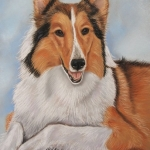 Schotse collie