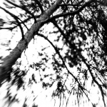 Tree (with lensbaby)