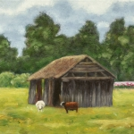Sheep shed