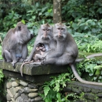 Ubud: Monkey forest