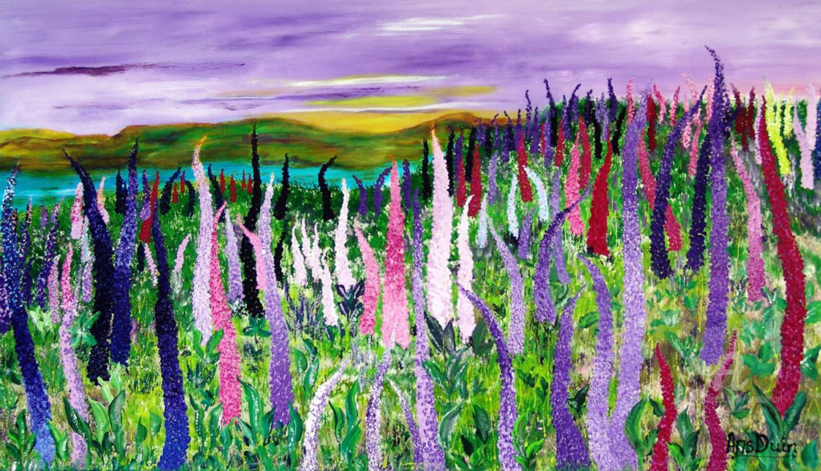 Fields with lupines