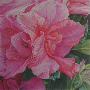 Many of my colored pencil drawings are also available as greeting cards. Size 5.2x5.2