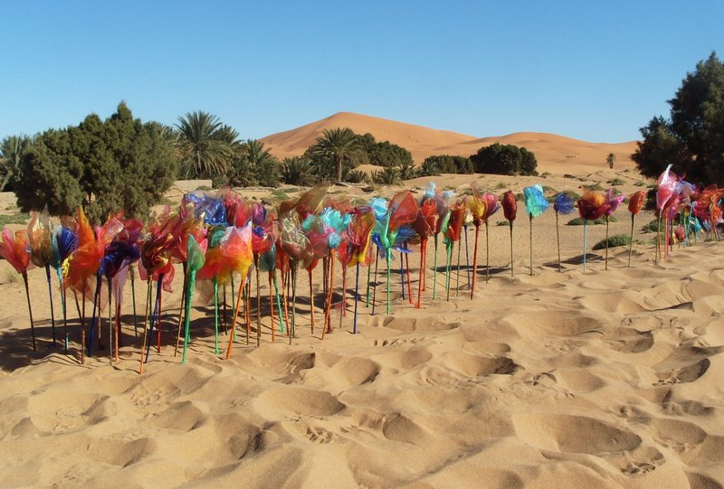 Travelling Flowers Sahara 1