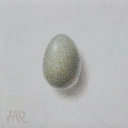 Egg blackbird