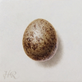 Kestrel egg