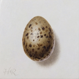 Black-headed Gull egg
