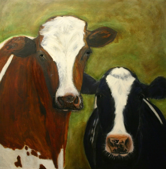 'DUTCH COWS'