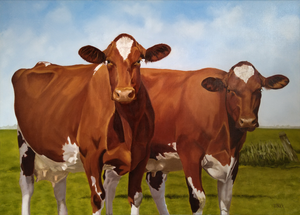 Portraits of cows