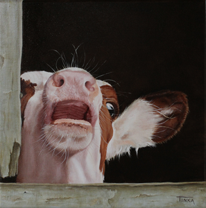 Portraits of calves