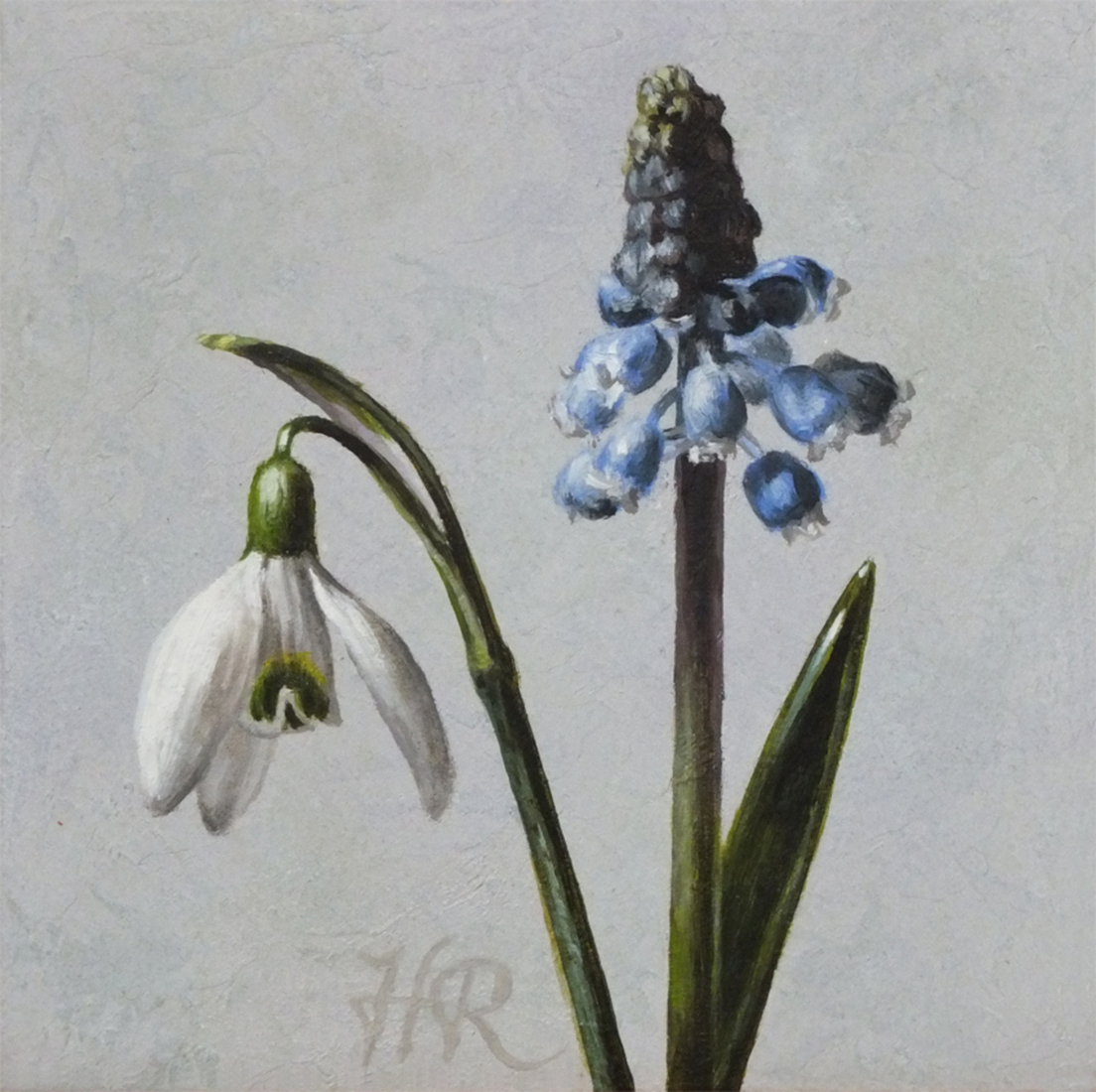 Snowdrop and blue grape