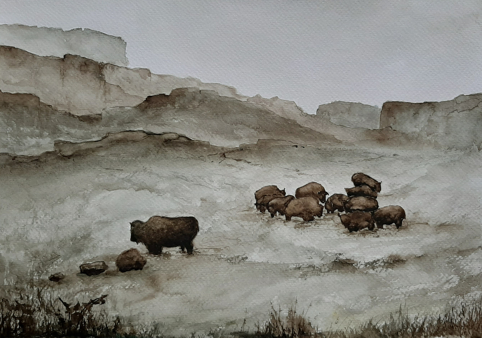 Bisons Yellowstone National Park, winter scene 3