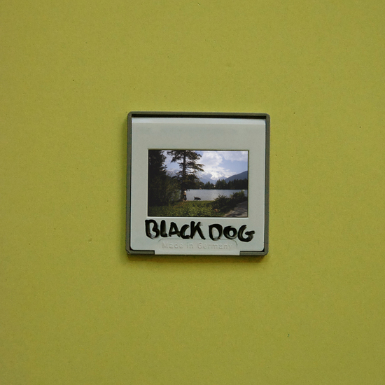 BLACK DOG (book)