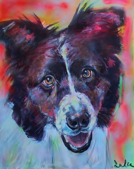 Border Collie portret