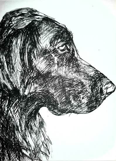 Xavi, flatcoated retriever #1