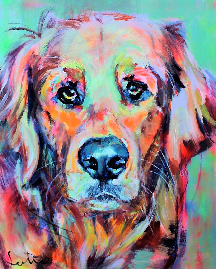 Golden Retriever portret