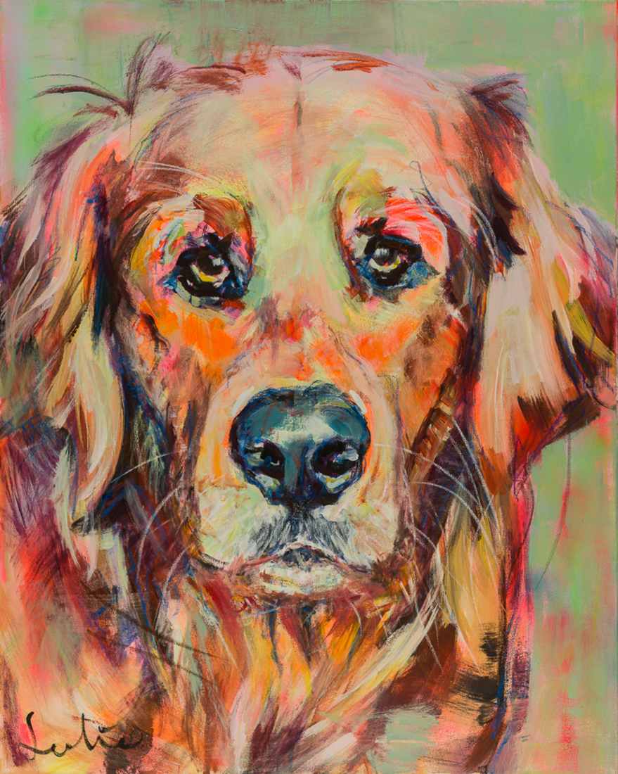 Hond Golden Retriever portret