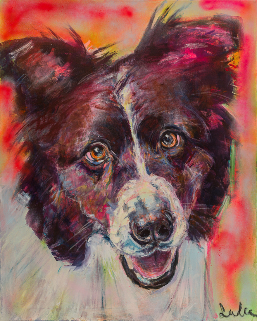 Hond Border Collie portret