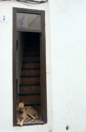 Hond in Portugal