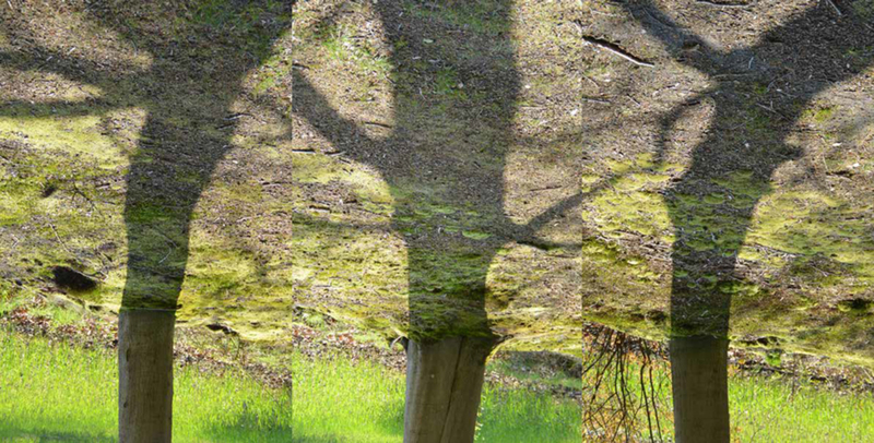 grafisch landschap Tree shadows