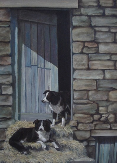 Border Collies Yorkshire