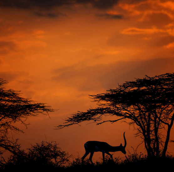 Sunset Shaba, Kenia