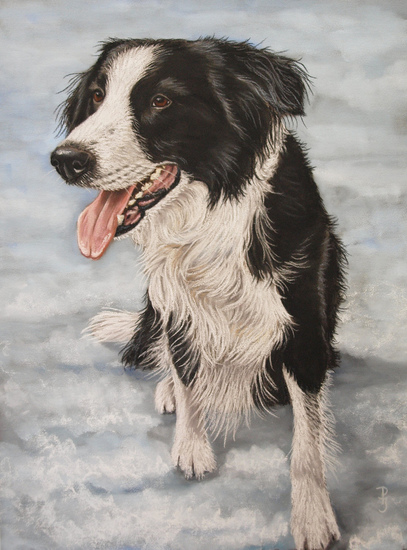 Border Collie in sneeuw