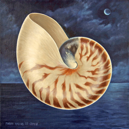 Nautilus by night