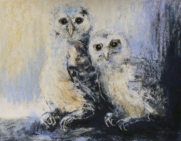 Blue owl chicks