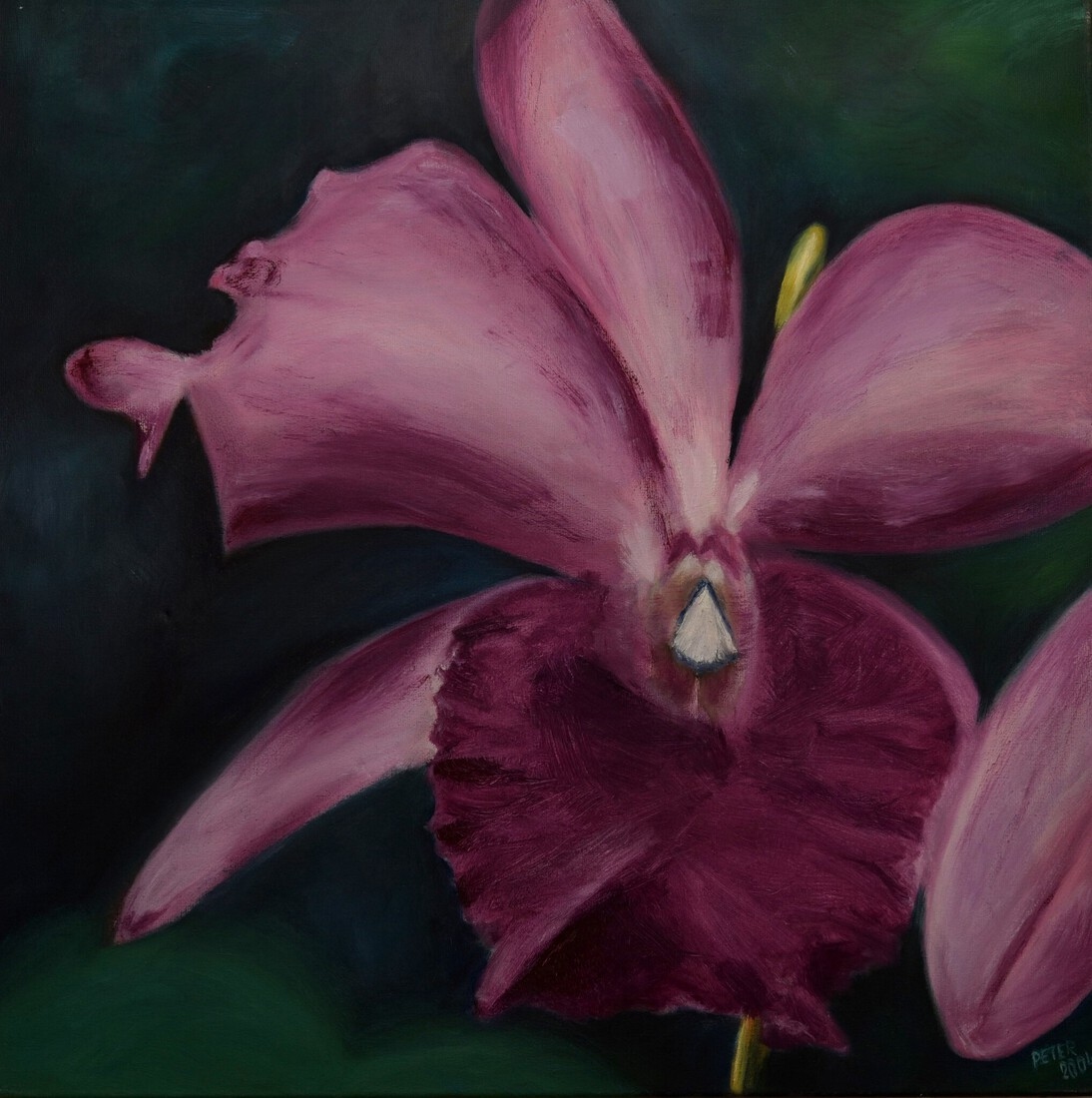 Orchidee (rose')